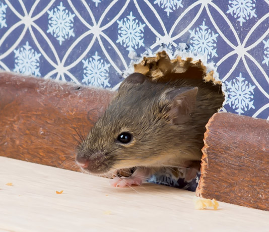 Abent Pest Control Mice Mouse Removal